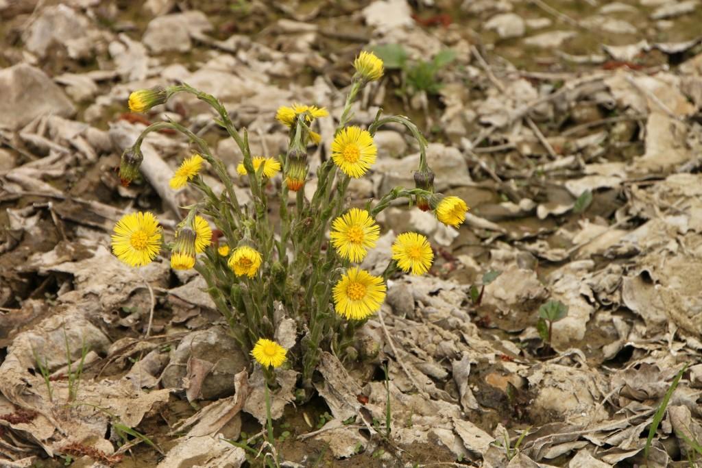 Kevättä Rinnassa